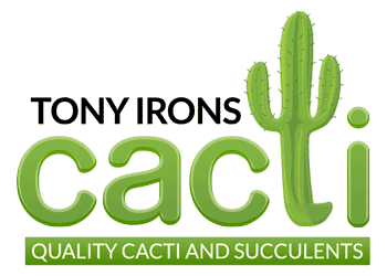 Quality Cacti, Lithops and Succulents